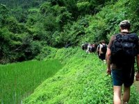 Cammina Nel Verde