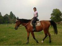 Horse cheer