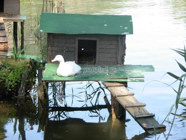 Piccole meraviglie sul lago