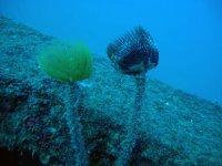 underwater blooms