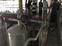 Processo di produzione del vino