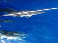 Cetacean sighting