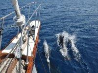 gite ed escursioni in barca a vela sud sardegna