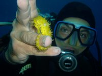 Snorkeling full day a Capoliveri