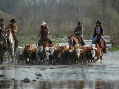 Cowboys Guest Ranch
