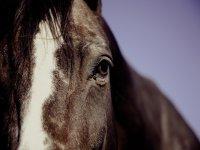 cavallo bellissimo
