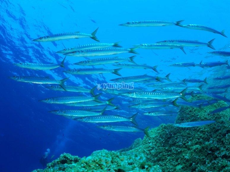 Barracuda Secca di Fonza