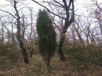 Immergersi nei boschi