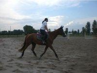 Equestrian center in farmhouse