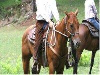 Vieni A Divertirti Con I Nostri Cavalli