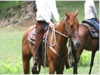 Pratica L' Equitazione Immerso Nella Natura