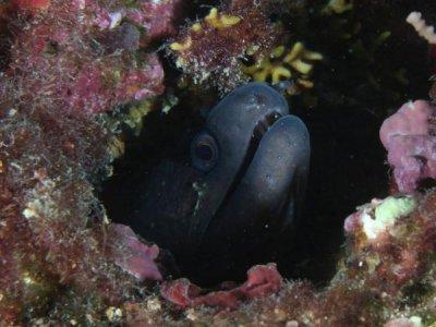 L'isola sotto il mare