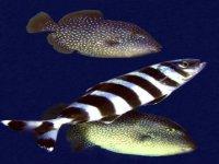 Una ricca fauna marina