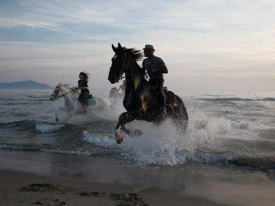 CELP - Passeggiate a Cavallo