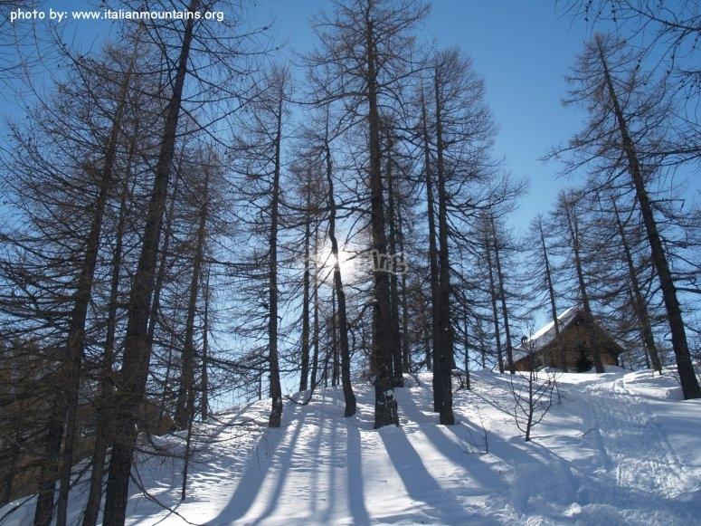 un piccolo rufugio nella pineta incantata all'alpe devero