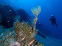 Diving in Santo Stefano