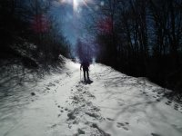 Snowshoeing in the park