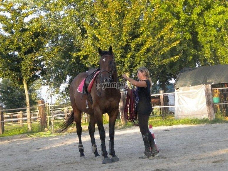 Gestione del cavallo