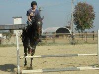 Lezione di equitazione Poirino