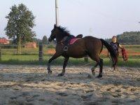 Pacchetto 10 lezioni di equitazione Poirino