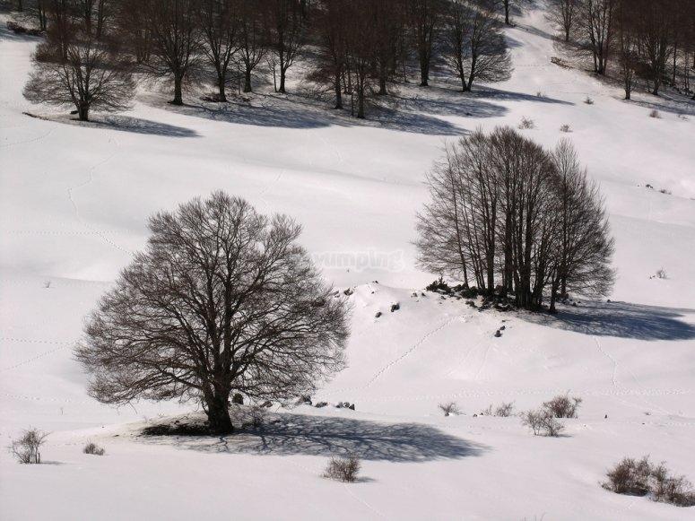 Inverno a Camposecco