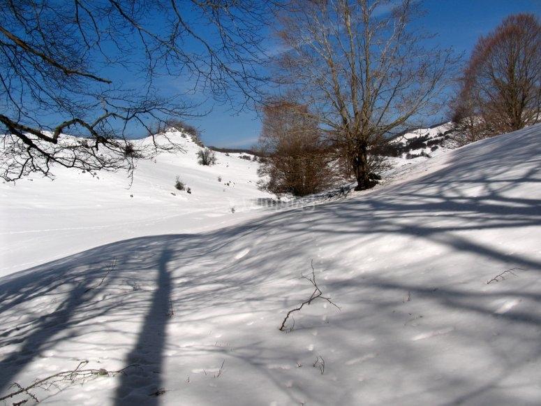 Percorsi nella neve