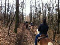 A cavallo nel bosco del Ticino