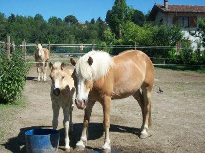 Trekking a cavallo Monte Camoscio e Mottarone
