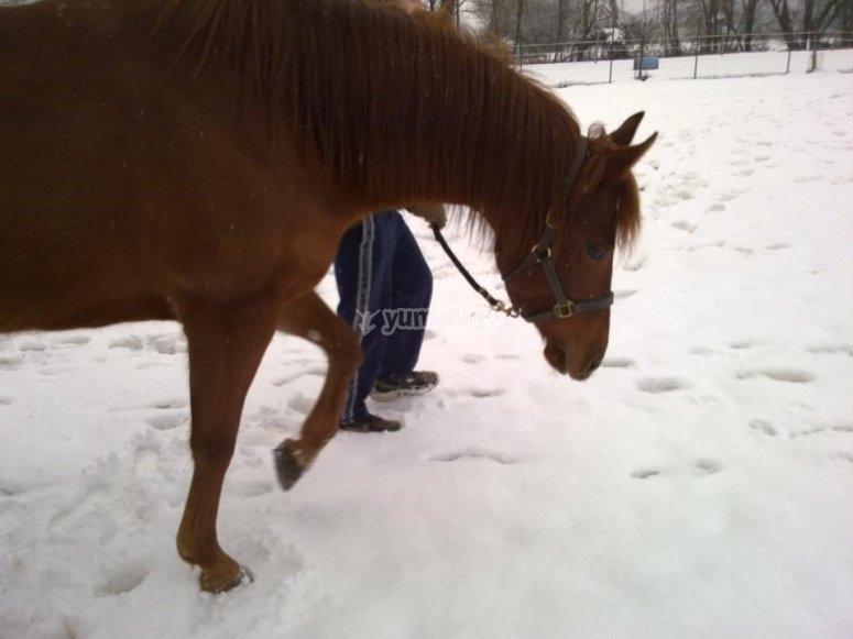 Scoprendo la neve