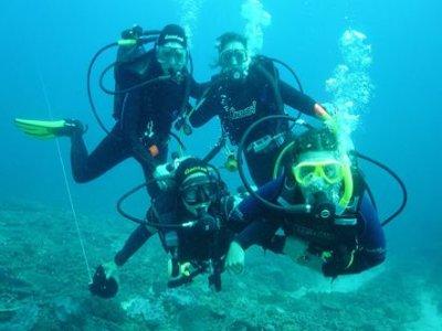 Sea Folk Diving