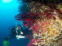 Corsi Diving PADI