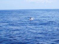 Navigando con i delfini