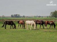 I nostri bellissimi cavalli