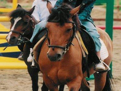 Compagnia Equestre Guelfi Neri