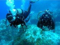 Immersioni Isole Tremiti