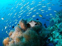 Flora and fauna of the sea
