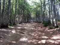 Passeggiate a cavallo nel bosco