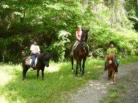 Passeggiate con pony e bambini