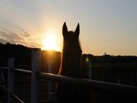 passeggiate a cavallo nel Conero