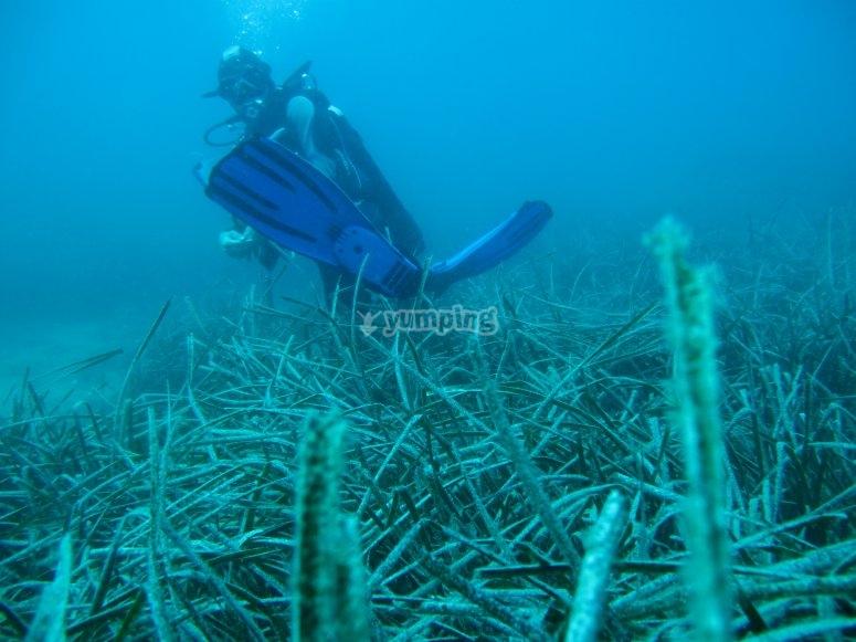 Underwater landscape / diver 2