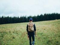 Verso il bosco