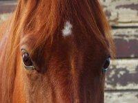 Occhi profondi di cavallo