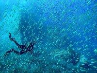 In mezzo ai pesci