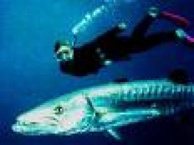 Rosa dei Venti Yacht Charter Diving
