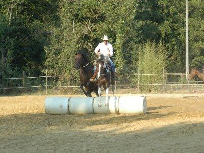 Corso gestione Parelli Natural Horsemanship