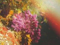 The underwater nature