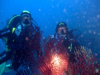 Diving with Archeodiving