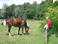 Settimane equestri per bambini e ragazzi