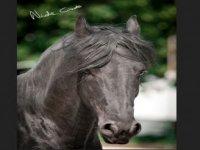 Circolo ippico e vendita cavalli