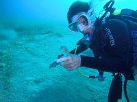 scoperta del cavalluccio marino